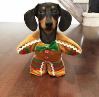 17 best ideas about Dachshund Costume on Pinterest
