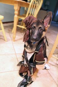 1000+ ideas about Jack Sparrow Costume on Pinterest ...