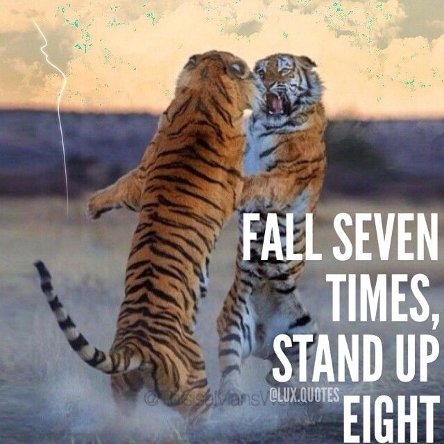 Fall Of Quotations Wallpapers Tiger Quotes Gallery Wallpapersin4k Net