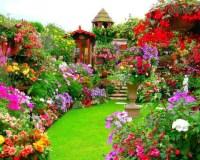 30 best Alice In Wonderland backyard