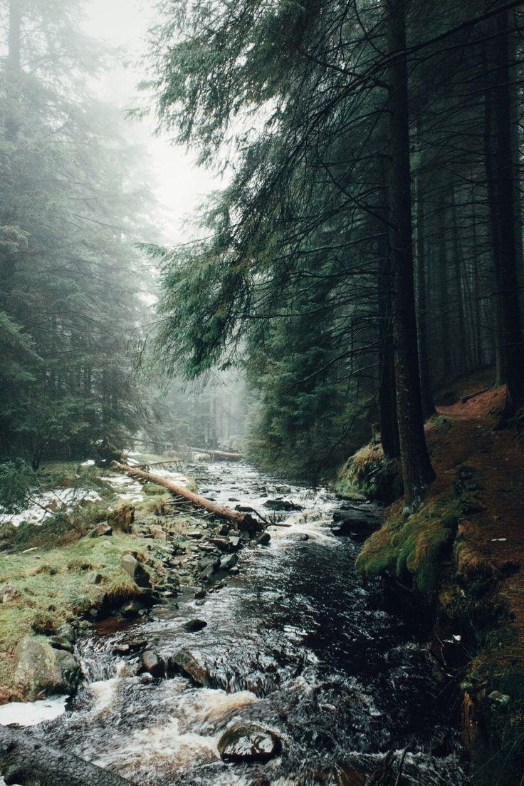 Night Vale Gravity Falls Wallpaper Best 20 Foggy Forest Ideas On Pinterest The Forset