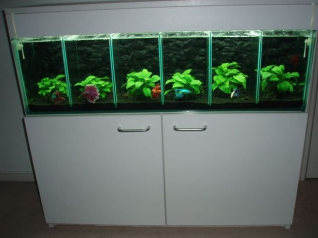 Betta Fish Tank Ideas, Betta Tanks, Betta Aquariums, Betta Fish Tanks