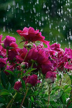 Animated Weather Wallpaper Iphone 94 Best Images About Flower On Rainy Day On Pinterest