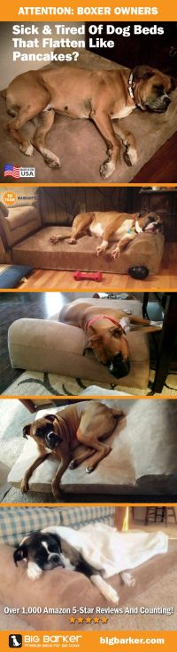 Boxer dog bed by Big Barker | Perfect for big dogs like ...