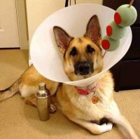 Best 25+ Dog costumes ideas on Pinterest   Dog halloween ...