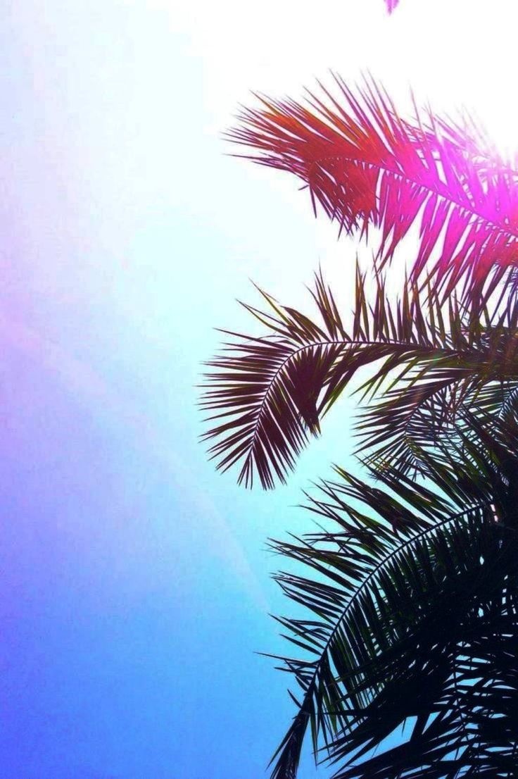 Palm Tree Iphone Wallpaper 9 Best Images About Best Wallpaper On Pinterest 3d