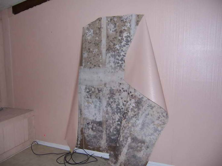 How To Remove Black Mold The Effective Way: Remove Black Mold In