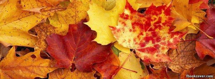 Fall Leaves Watercolor Wallpaper Autumn Nature Fall Cover Facebook Timeline Profile Covers