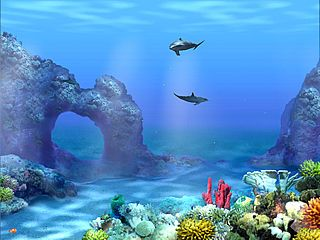 Living 3d Dolphins Animated Wallpaper Windows 7 10 Images About Recipes To Cook On Pinterest Dolphins