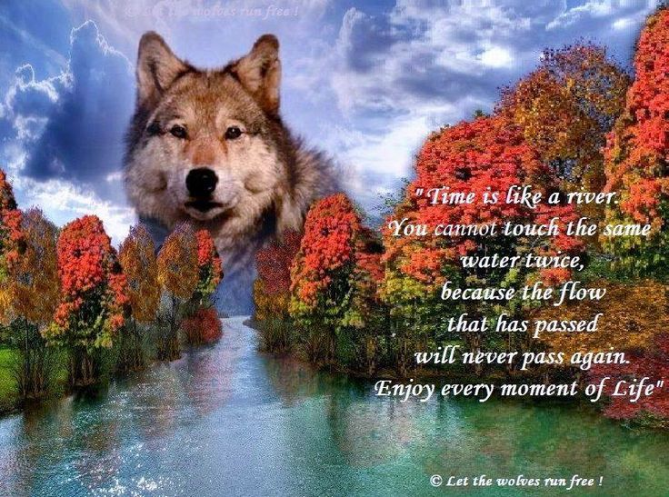 Cute Wallpaper Patterns Let The Wolves Run Free Lone Wolf Quotes Pinterest Wolf