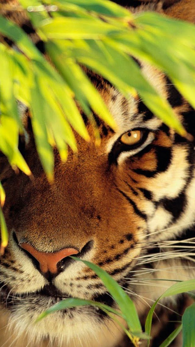 Earth 3d Live Wallpaper Windows 7 20 Best Ideas About Tigers On Pinterest Big Tiger Cute