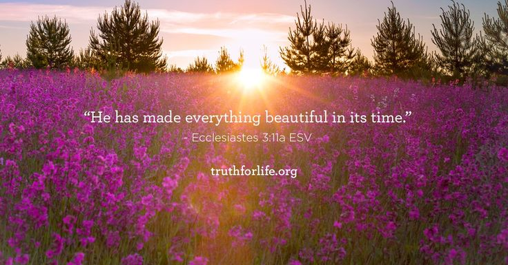 Love Saying Quotes Wallpapers Quot He Has Made Everything Beautiful In Its Time