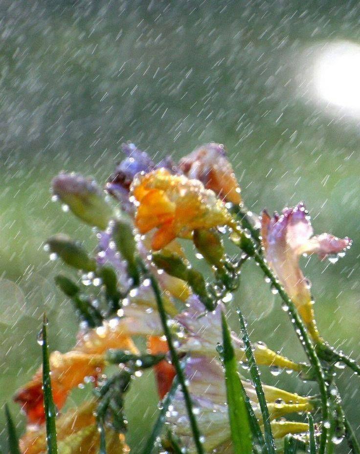 Raindrops Falling On Flowers Wallpaper A Spring Rain Rain Pinterest Beautiful Spring And