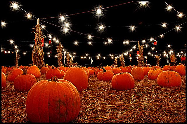 Fall Leaves And Pumpkins Wallpaper 1000 Images About Fall The Season Of Change On