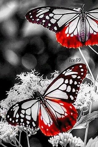 Animated Butterfly Wallpaper Download Animated 320x480 171 Neon Butterflies 187 Cell Phone