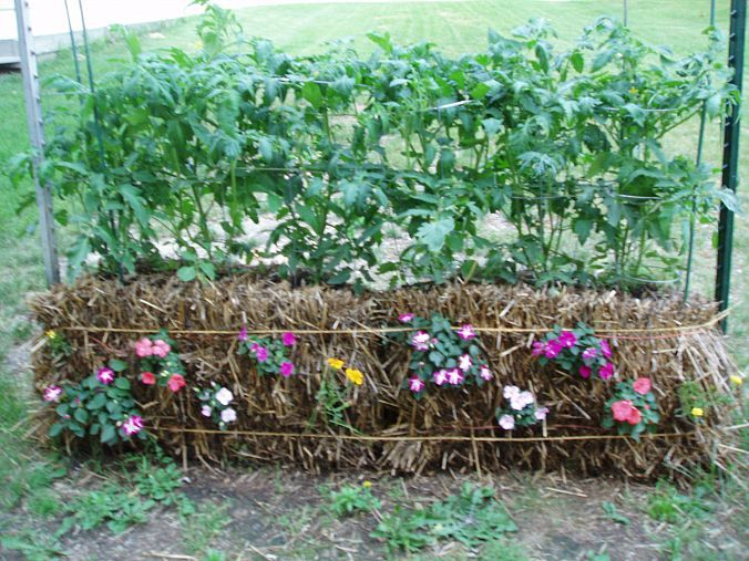 1000+ Ideas About Straw Bale Gardening On Pinterest   Hay Bale