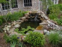 1000+ images about Koi pond on Pinterest | Small garden ...