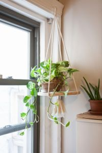 25+ best ideas about Indoor Hanging Plants on Pinterest ...