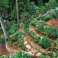 1000+ images about Gardening - On a hill on Pinterest ...