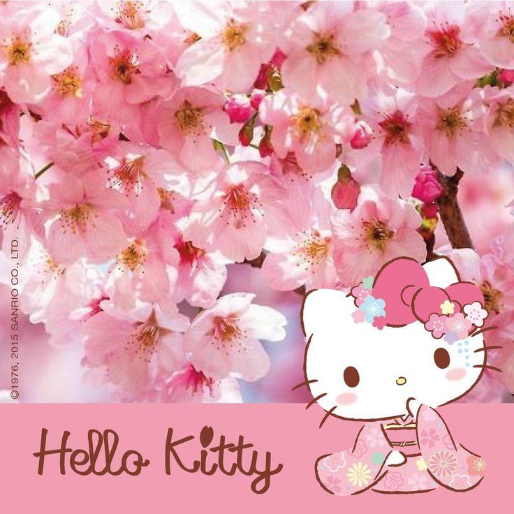 Cute Pink Cat Wallpapers Hello Kitty Sakura Hello Kitty Amp Friends Pinterest