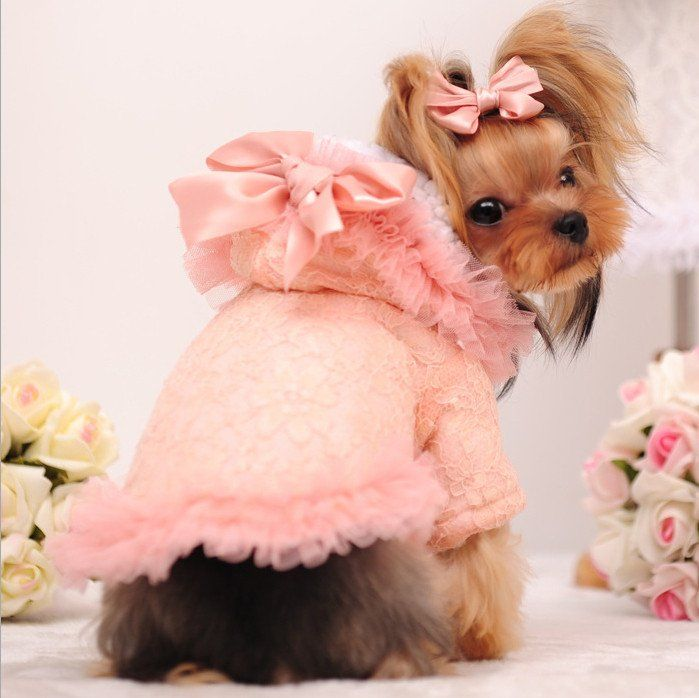 25+ best ideas about Girl dog clothes on Pinterest