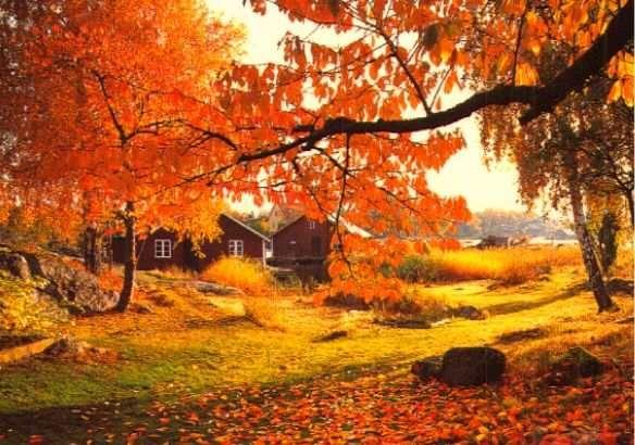 Fall Owl Wallpapers 1000 Bilder Zu Herbst Auf Pinterest Herbst Kerzen Deko