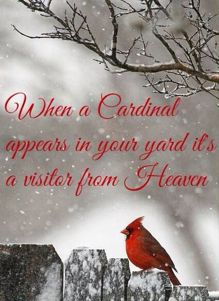 The Yellow Wallpaper Symbolism Quotes 25 Best Ideas About Cardinal Birds On Pinterest