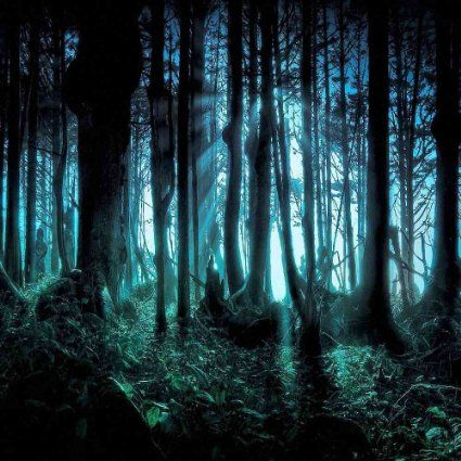 Wallpaper Seram 3d Spooky Forest 10 X 10 Cp Backdrop Computer Printed