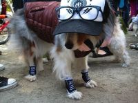 211 best images about DIYcraft: Costume/ Animal on ...