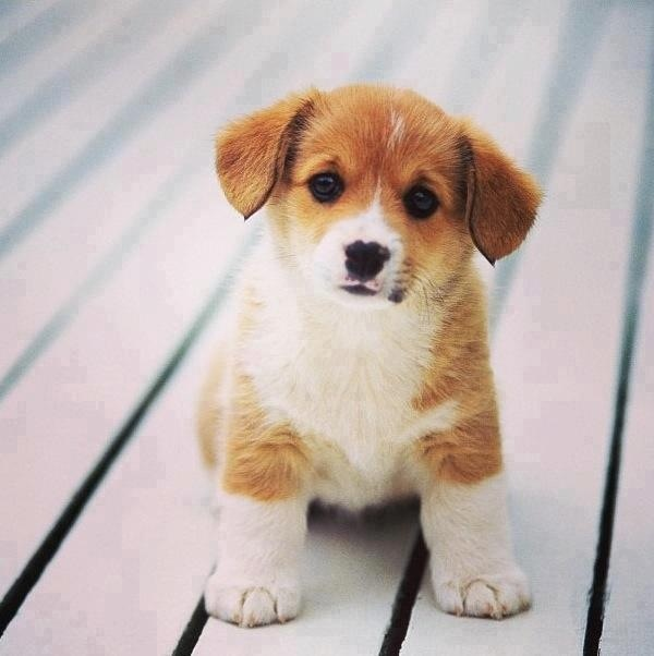 Cute Dog Baby Hd Wallpaper 38 Best Images About Cuite On Pinterest Chihuahuas Just