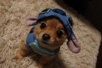 Dog + Stitch Costume=