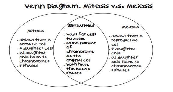 venn diagram comparing mitosis and meiosis
