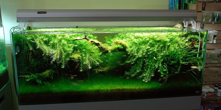 Grow Beleuchtung Led Rotala, Dwarf Hairgrass, Java Fern, Gorgeous | Aquascapes