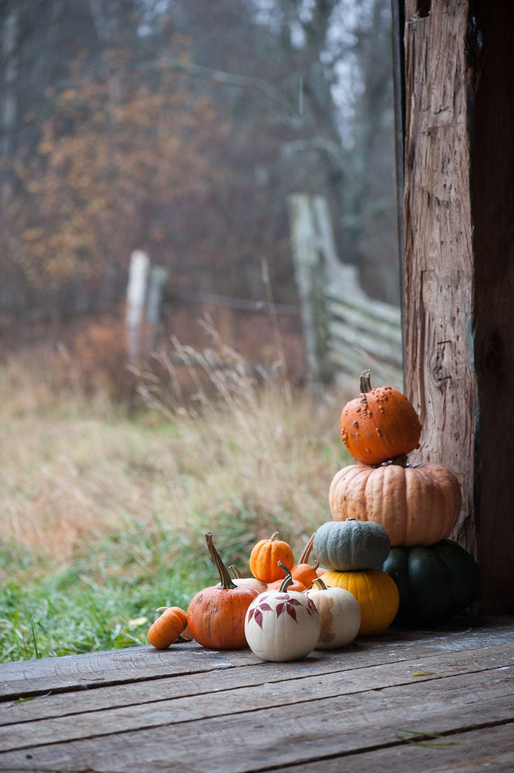 Cute Crisp Wallpapers 1000 Ideas About Fall Backgrounds Iphone On Pinterest