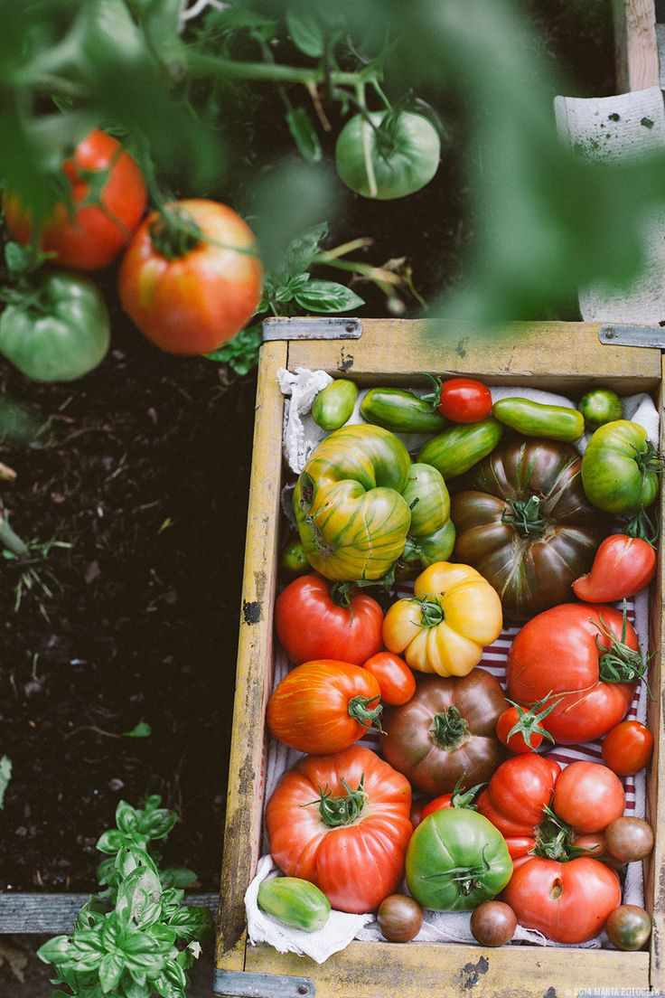 17 Best Ideas About Growing Tomatoes On Pinterest Grow