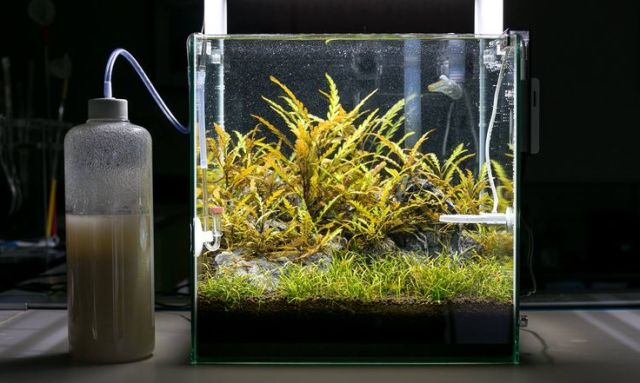 CO2 in 30 cube tank | Aquascape | Pinterest | Cubes, Tanks and Photos