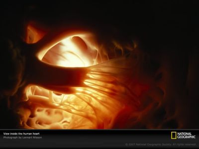 What the inside of your heart looks like... in case you were wondering. :) | Pictures and photos ...