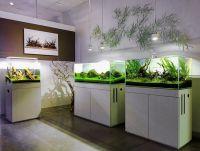 93 best aquarium images on Pinterest