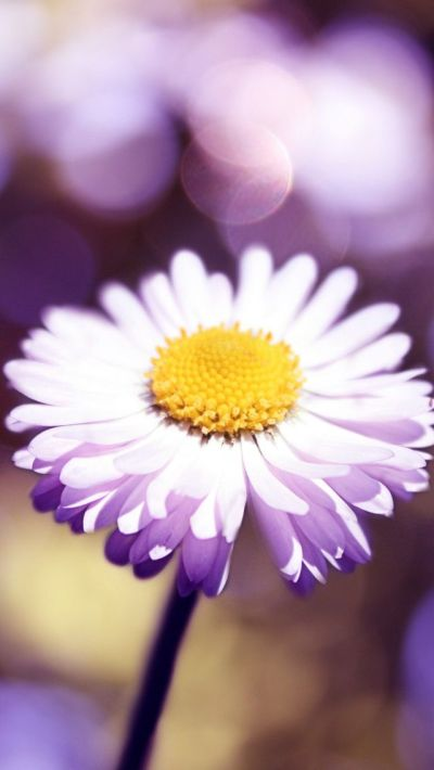 237 best images about Gardening on Pinterest | Pink flowers, iPhone wallpapers and Dandelions