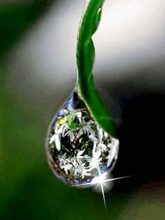 Drop Of Water Falling From A Leaf Wallpaper Dew Drops Gif Animated Wallpaper Screensaver 240x320 For