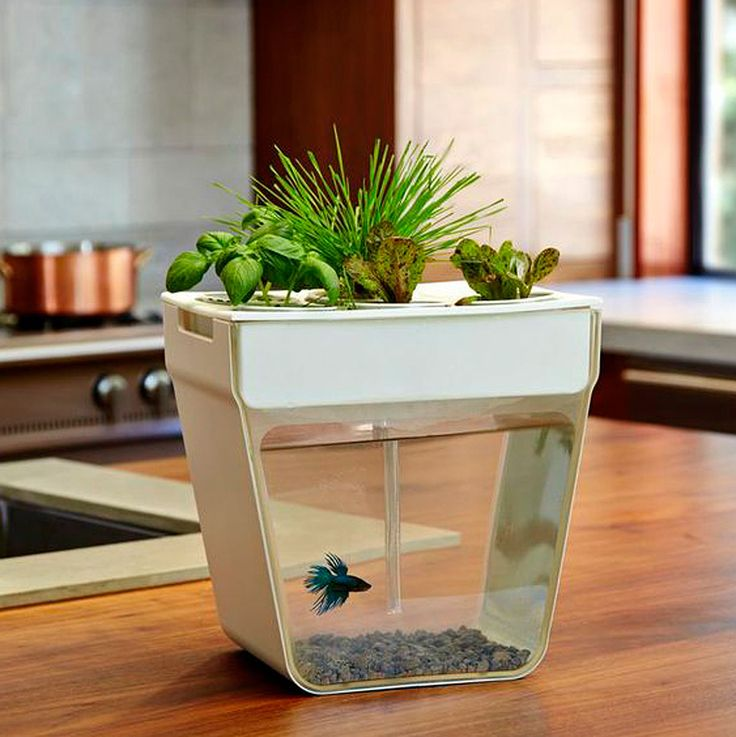 A Countertop Hydroponics Garden That Cleans The Fish Tank By Having The Plants Use The Fish