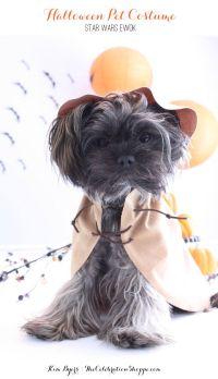 Halloween Pet Costumes   Kim Byers   DIY Ewok Costume ...
