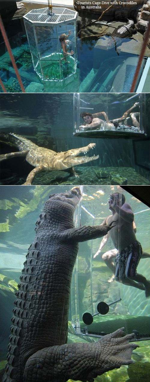 Dive with crocodiles in this clear cage in Australia. Bucket list.: