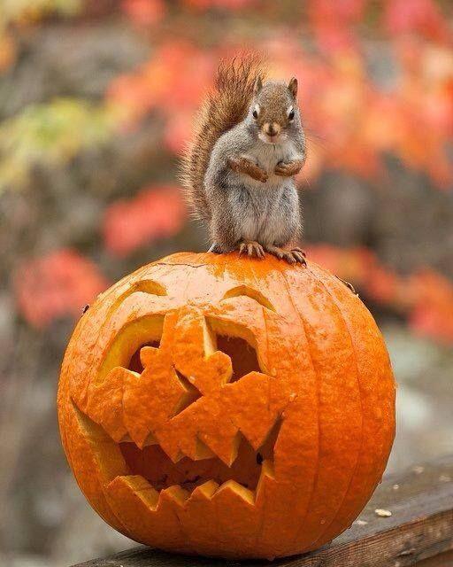 Fall Bird Feeder Wallpaper Trick Or Treat Squirrel Chipmunks And Animal