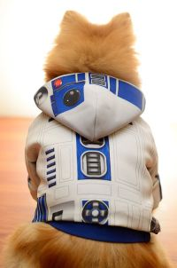 1000+ ideas about Cute Dog Costumes on Pinterest