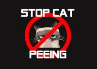 How to stop a cat from peeing on furniture | Thing to ...