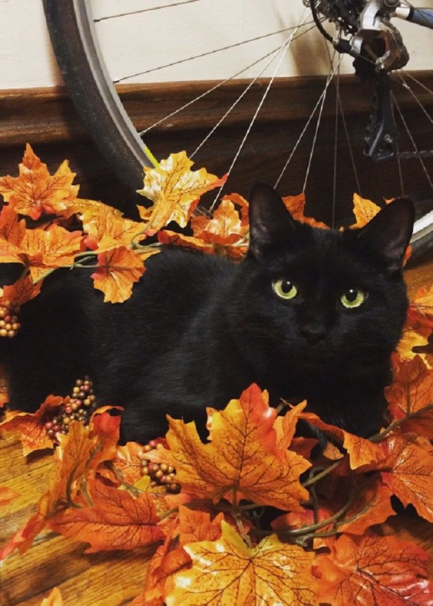Fall Harvest Wallpaper Images Autumn Leaves And Black Cat Cats Pinterest Cats