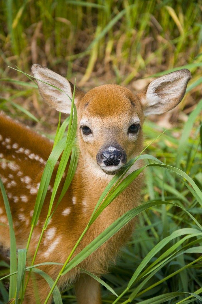 Animal House Wallpaper Deer Striped Butt Google Search Animals Pinterest
