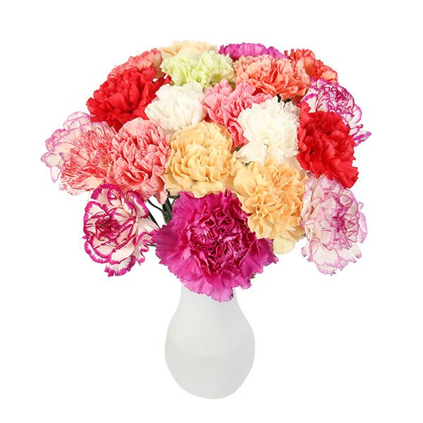 Carnation Flower Gift 62 Best Images About Carnations On Pinterest | Carnation