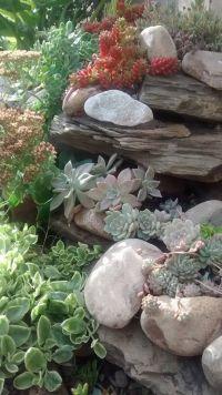 Best 25+ Succulent rock garden ideas only on Pinterest ...